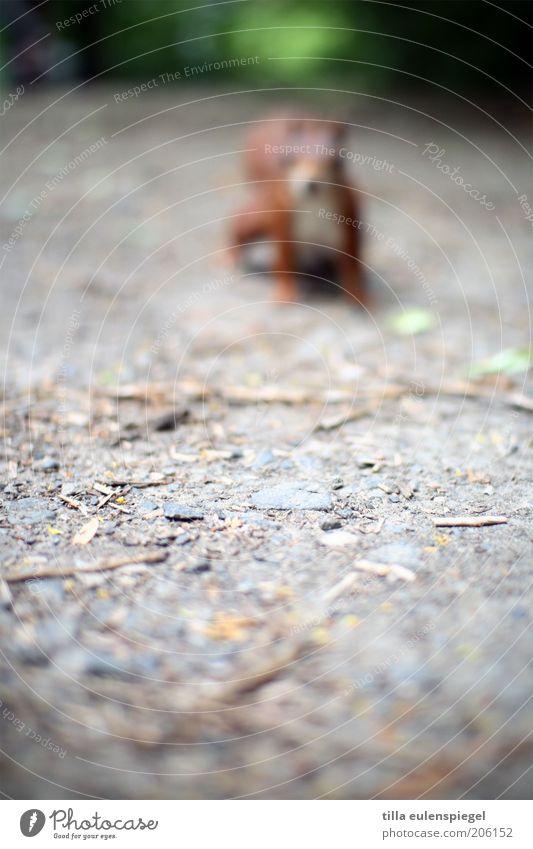 neulich ging ich ohne Brille aus dem Haus Natur Tier Ferne Park warten Umwelt Ausflug beobachten wild Ferien & Urlaub & Reisen Neugier entdecken Wildtier