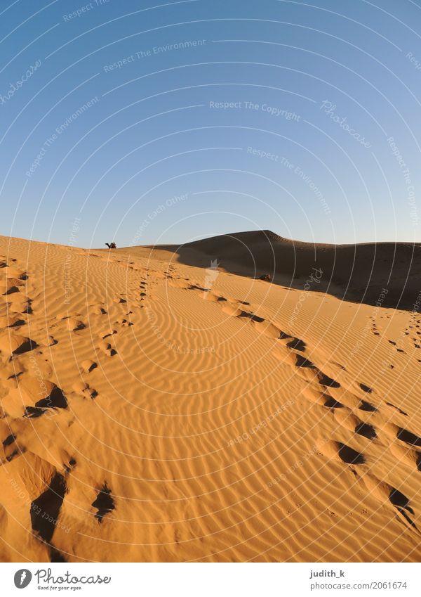 Spuren im Sand Ferien & Urlaub & Reisen Tourismus Ausflug Abenteuer Ferne Freiheit Safari Expedition Wüste Reiten Natur Landschaft Klima Dürre Oase Stranddüne