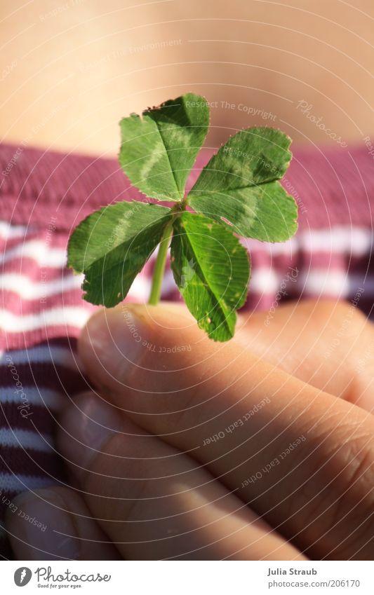 kann man glück verschenken Mensch feminin Haut Finger 1 Sommer Schönes Wetter Gras Blatt Grünpflanze T-Shirt Fröhlichkeit Glück grün violett weiß vierblättrig