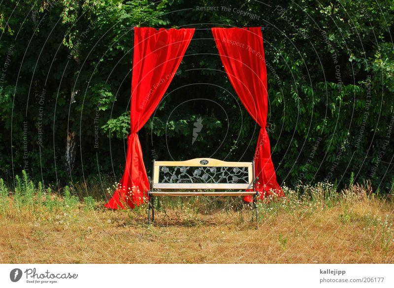 platz an der sonne Natur Baum rot Umwelt Stil Kunst elegant Erfolg ästhetisch leer Show Kultur Theaterschauspiel Veranstaltung Blume