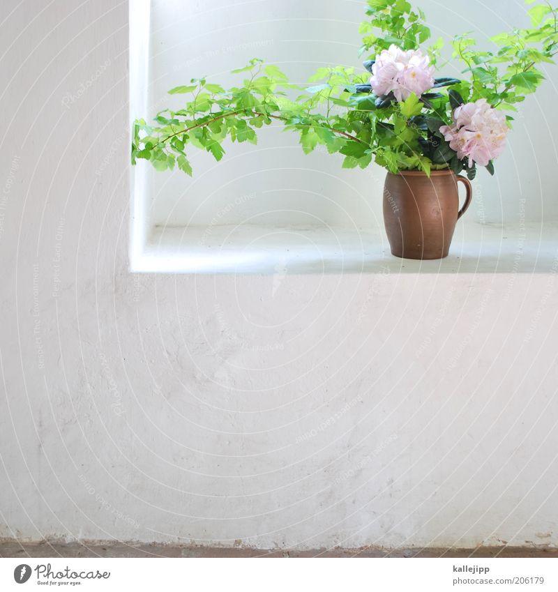 stille, kühle ecke schön Sommer Blume Stil Frühling hell Raum elegant natürlich frisch Dekoration & Verzierung Ecke Sauberkeit Blühend Blumentopf nachhaltig