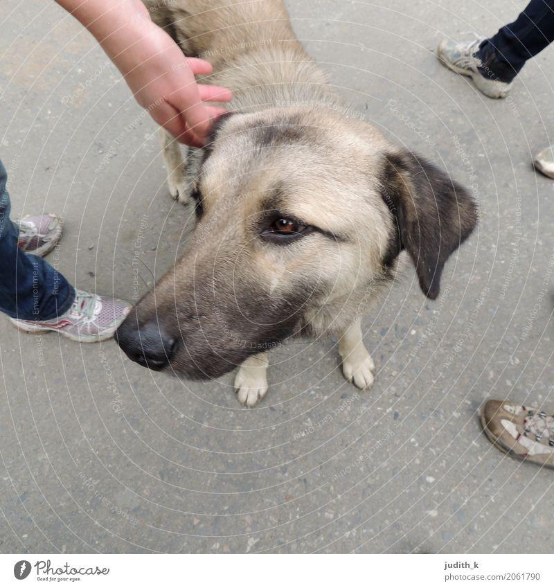 hello dog 01 Mensch Fuß Menschengruppe Schuhe Tier Haustier Hund Fell Streichelzoo berühren genießen Liebe Blick Spielen Glück kuschlig Neugier niedlich unten
