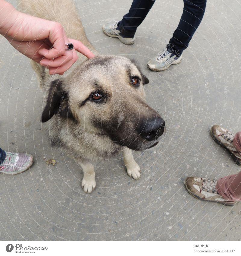 hello dog 03 Mensch Hand Fuß Menschengruppe Schuhe Tier Haustier Hund Fell Streichelzoo 1 berühren genießen Liebe Blick Spielen Glück kuschlig Neugier niedlich