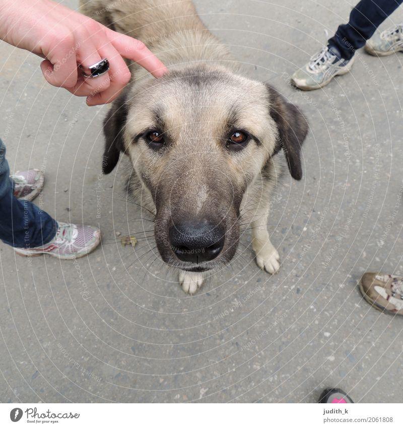 hello dog 02 Mensch Hund Hand Tier Freude Liebe Gefühle Spielen Glück Fuß Menschengruppe Zufriedenheit Schuhe genießen niedlich berühren