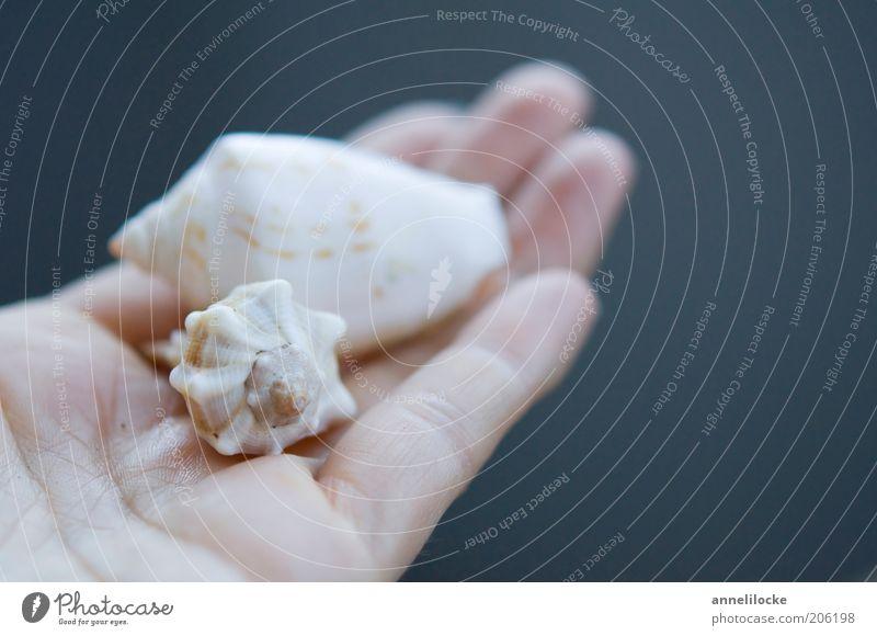 Muschelsuche Natur blau Hand weiß schön Ferien & Urlaub & Reisen Sommer Tier Umwelt Finger Dekoration & Verzierung festhalten Sommerurlaub Sammlung Fernweh Muschel