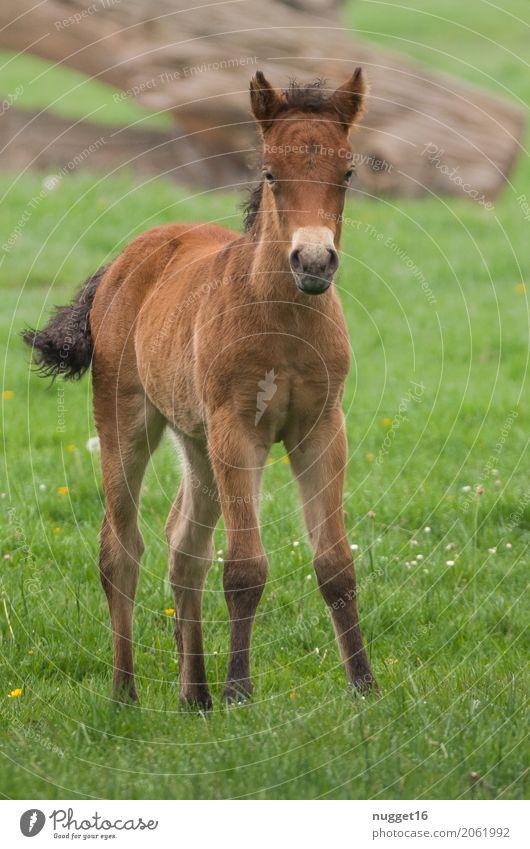 Przewalskifohlen Frühling Sommer Herbst Schönes Wetter Baum Gras Wiese Tier Wildtier Pferd Tiergesicht Zoo Streichelzoo 1 Tierjunges beobachten ästhetisch
