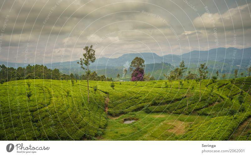 Teeplantagen von Kandy Umwelt Natur Landschaft Pflanze Himmel Wolken Horizont Sonne Frühling Sommer Wetter Schönes Wetter Wärme Grünpflanze exotisch Garten Park