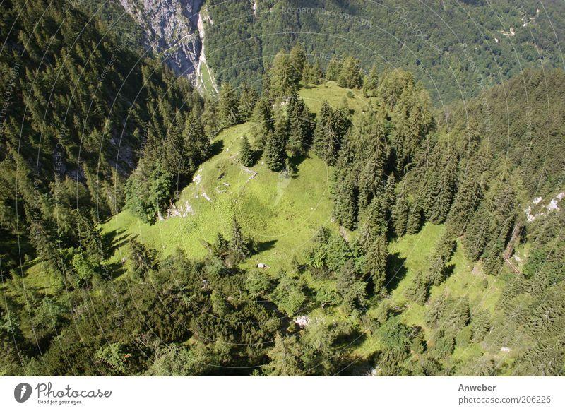 Höhenangst? Umwelt Natur Landschaft Pflanze Erde Sommer Schönes Wetter Baum Wald Alpen Berge u. Gebirge Zugspitze Wetterstein höllental Schlucht Bayern