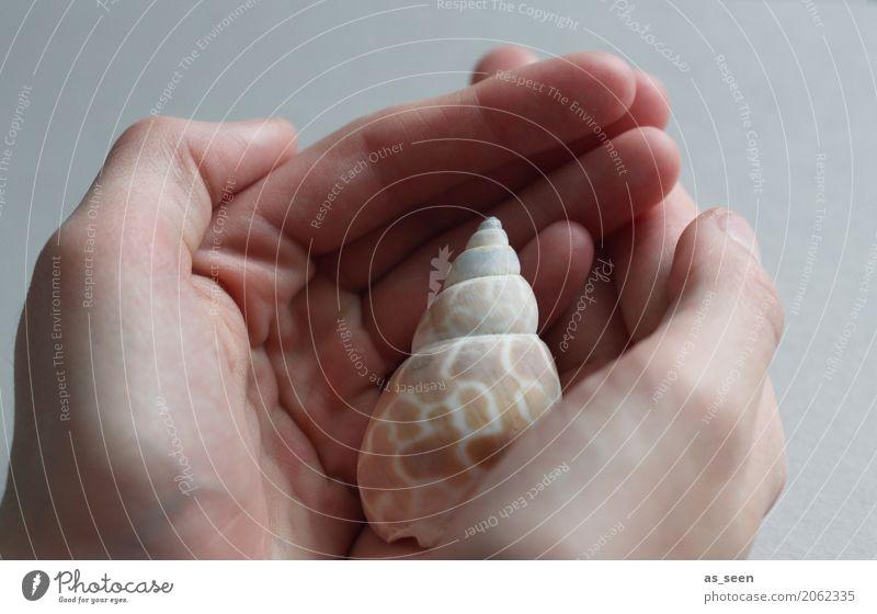 Achtsamkeit Natur Sommer weiß Hand Meer Erholung ruhig Umwelt Leben Gesundheit Gesundheitswesen Design ästhetisch authentisch Finger berühren
