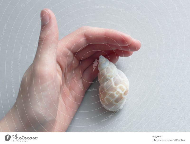 Beschützen Wellness harmonisch ruhig Meditation Hand Finger Umwelt Natur Schnecke Muschel Schneckenhaus berühren festhalten maritim rund Spitze braun grau weiß