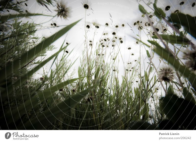 Liebling, ich habe die Kinder geschrumpft Umwelt Natur Landschaft Pflanze Sommer Schönes Wetter Park Wiese hocken Gras Blüte Kontrolle beobachten klein