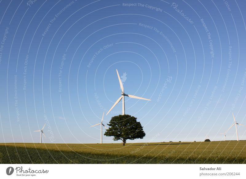 Photosynthese3.0 Himmel Baum grün blau Feld Energie Energiewirtschaft gut Windkraftanlage Ackerbau Umweltschutz Weizen Schleswig-Holstein Weizenfeld regenerativ Erneuerbare Energie