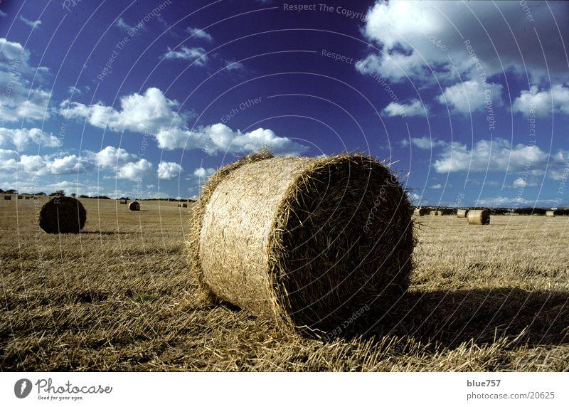 North East 1 Himmel blau Wolken gelb Feld rund Ernte Stroh Großbritannien Strohballen