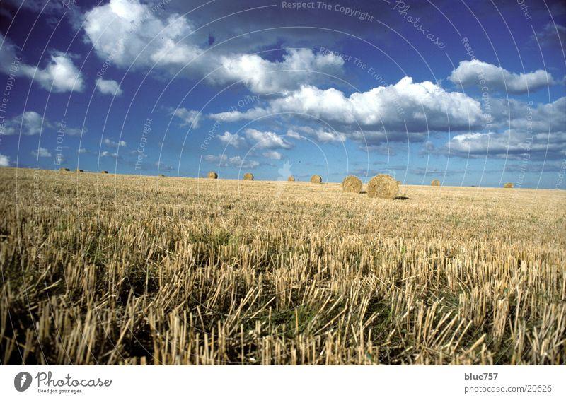 North East 2 Stroh Feld rund gelb Wolken Strohballen Himmel blau