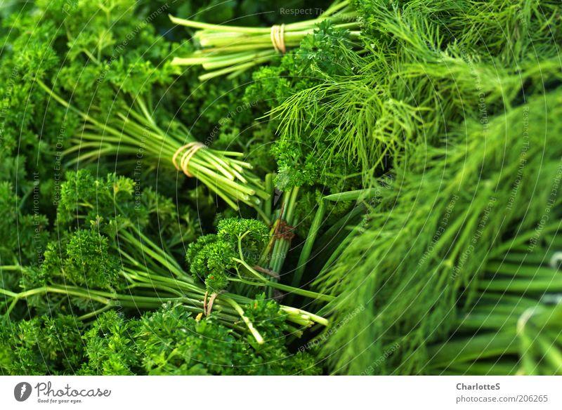 Markttag grün Pflanze Ernährung Lebensmittel frisch Wachstum Kräuter & Gewürze Bioprodukte saftig Bündel Grünpflanze Gesunde Ernährung Nutzpflanze Petersilie