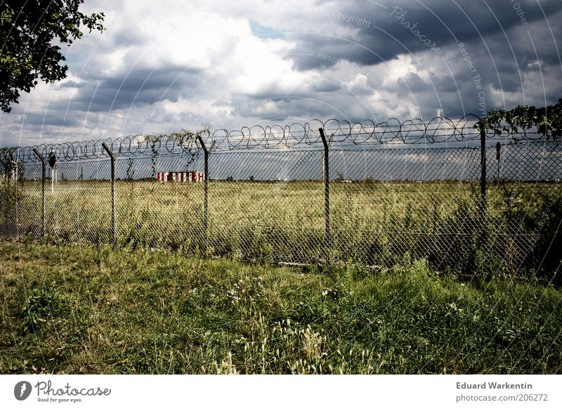 Tempelhof Pflanze Luft Himmel Wolken Gewitterwolken Klima Wetter schlechtes Wetter Gras Berlin Europa Menschenleer Park Flughafen Sehenswürdigkeit blau grau