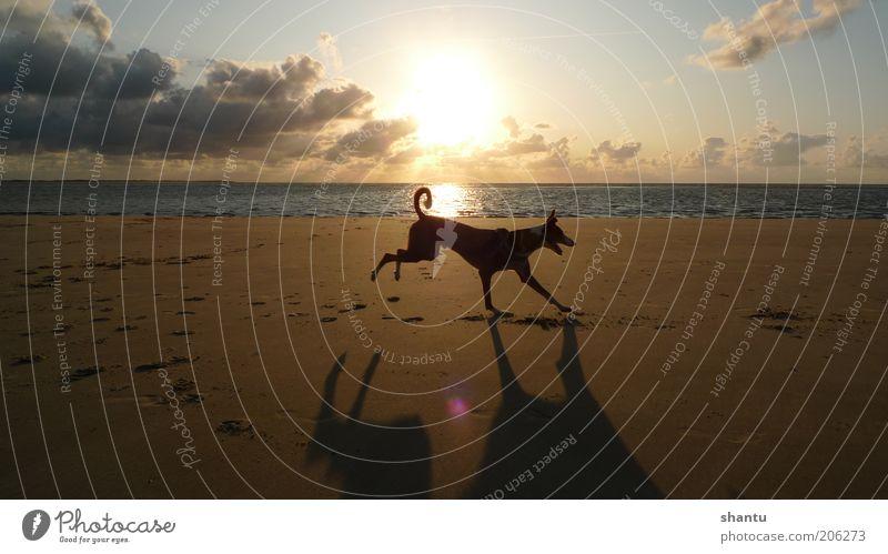 Himmel Wolken Tier Bewegung Hund Sand Insel Schönes Wetter Nordsee Meer Haustier Abend