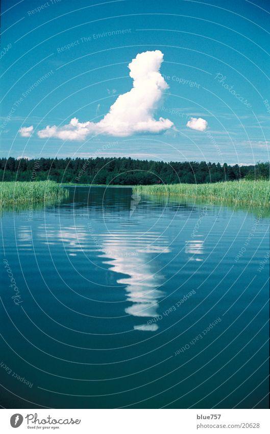 Leise Wolke Wasser weiß grün blau ruhig Wolken Wald Schilfrohr Windstille