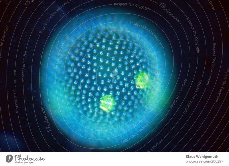 Mystify blue Natur Wasser grün blau Pflanze ruhig schwarz Umwelt ästhetisch rund Makroaufnahme Algen Mikrofotografie Blitzlichtaufnahme Blattgrün molekular