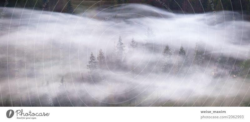 Rauchwellen in einem Bergwald. Nebligen Morgen Panorama Natur Ferien & Urlaub & Reisen Pflanze Sommer grün weiß Baum Landschaft Wolken Ferne Wald