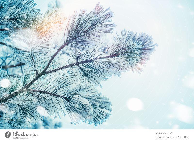 Tannenbaum am Wintertag Lifestyle Garten Weihnachten & Advent Natur Schönes Wetter Pflanze Baum Park weich Frost Winterurlaub Schnee Tannenzweig Tannennadel