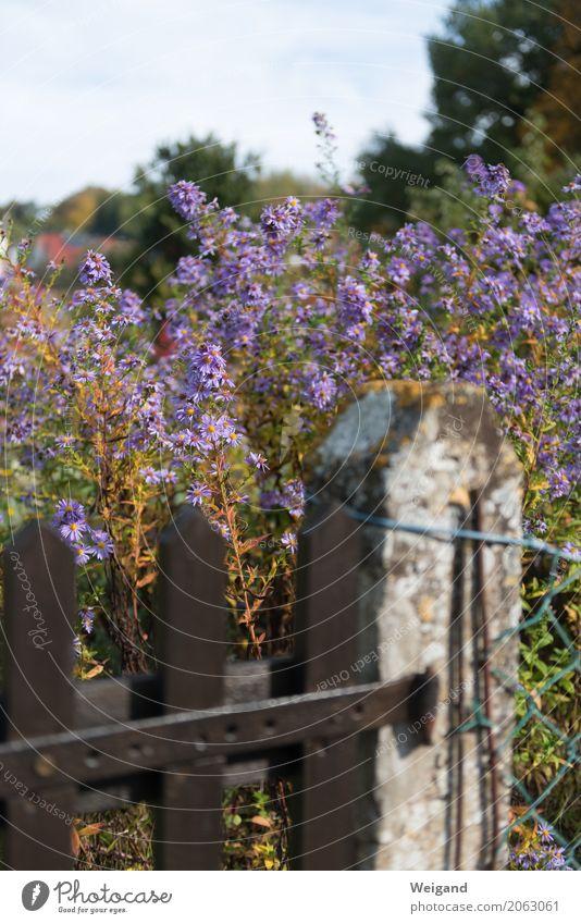 Wegesrand Pflanze Duft violett Garten Zaun Blume Landlust Landleben Himmel Gartenarbeit Stadt Außenaufnahme Menschenleer