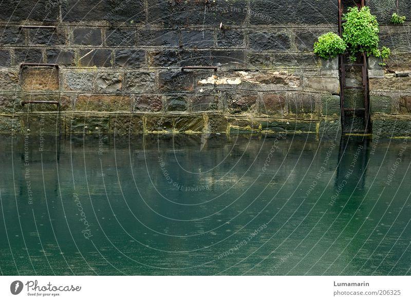 Grenzgänge Umwelt Pflanze Wasser Regen historisch nass natürlich trist grün Anlegestelle Leiter Mauer Fluss Meer Station Stein Steinmauer feucht bewachsen
