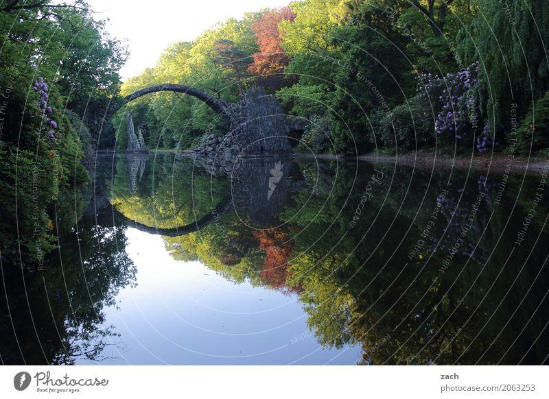 Bitte spiegeln... Natur Wasser Frühling Schönes Wetter Pflanze Baum Blume Sträucher Rhododendron Park Seeufer Teich Kromlau Brücke Rakotzbrücke Teufelsbrücke