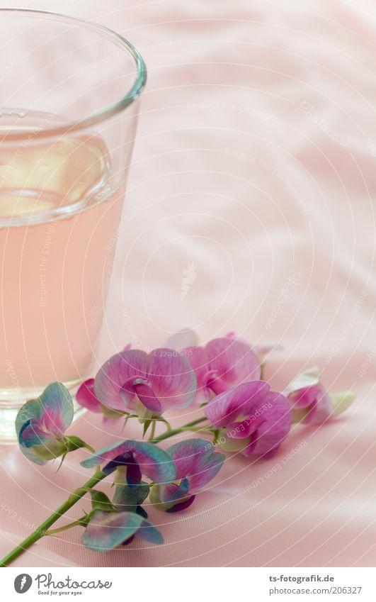 Wicke trifft Rhabarbersaft Getränk Erfrischungsgetränk Limonade Saft Alkohol Roséwein Becher Glas Pflanze Blume Blüte Gartenwicke Stillleben ästhetisch exotisch