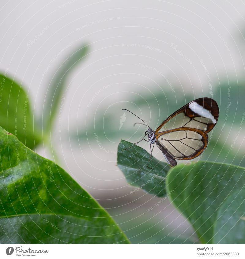 Posieren!!!! Natur Pflanze Sommer schön grün Blatt Tier Umwelt Frühling Wiese natürlich Garten Park ästhetisch Wildtier stehen