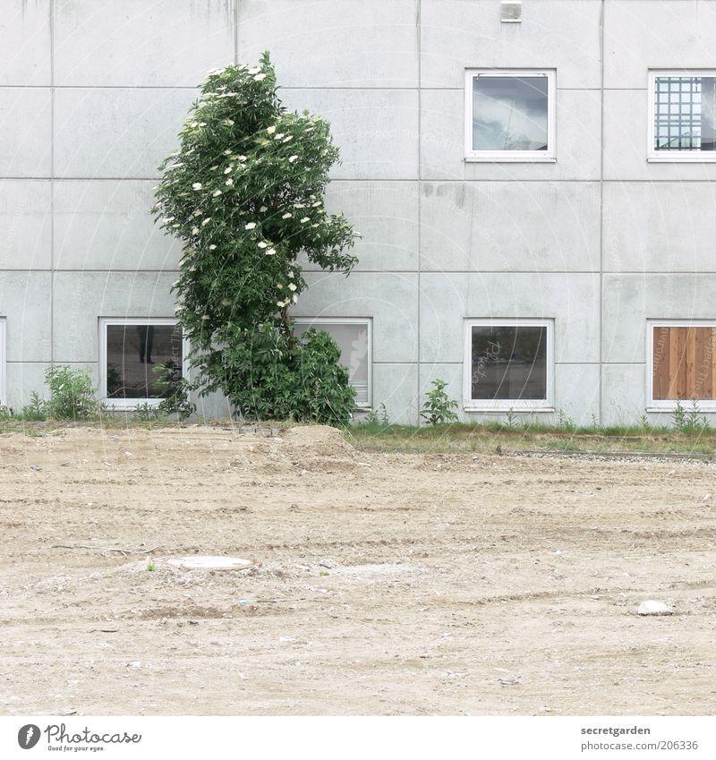 [H 10.1] plattenbau mit halbfertigem pool. Natur Pflanze Erde Frühling Baum Sträucher Grünpflanze Hügel Platz Bauwerk Gebäude Architektur Plattenbau Fassade