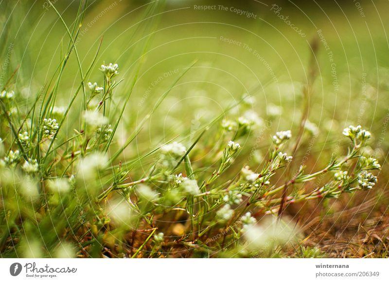 Natur Pflanze Blume Leben Bewegung Glück Freiheit Feld Erde elegant Kraft genießen einzigartig Warmherzigkeit Macht Hoffnung