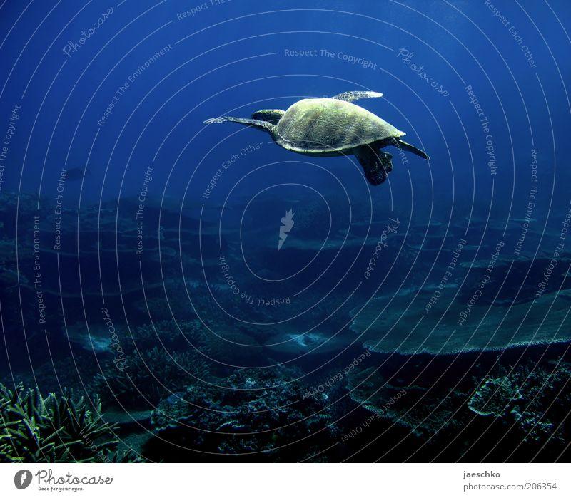 wie fliegen Natur Ferien & Urlaub & Reisen schön Meer Einsamkeit Tier Ferne Bewegung Freiheit Schwimmen & Baden Zufriedenheit elegant ästhetisch einzigartig Gelassenheit tauchen