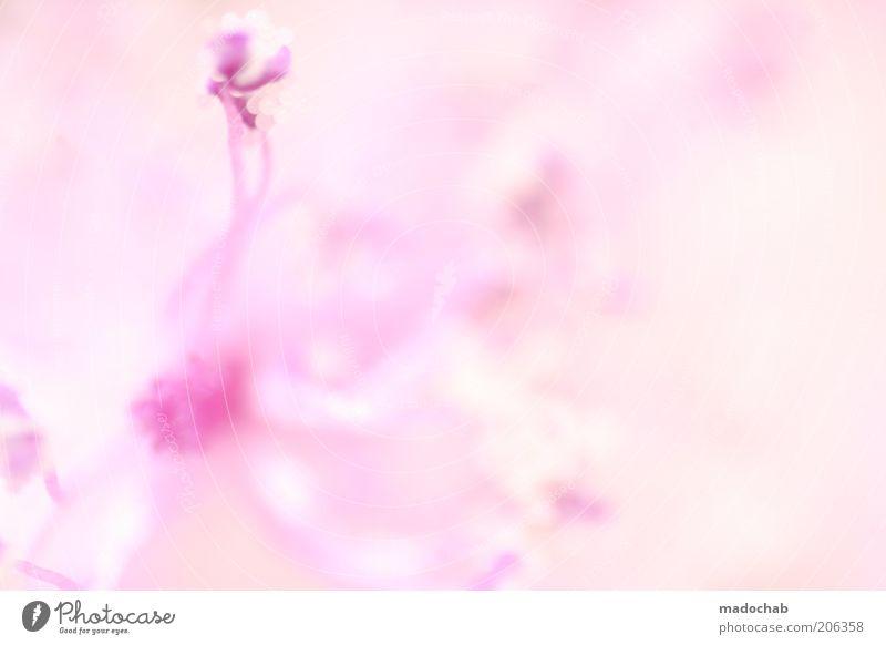 verlockend schön Pflanze ruhig Blüte Stil hell rosa ästhetisch weich geheimnisvoll zart Duft exotisch harmonisch Blütenblatt abstrakt