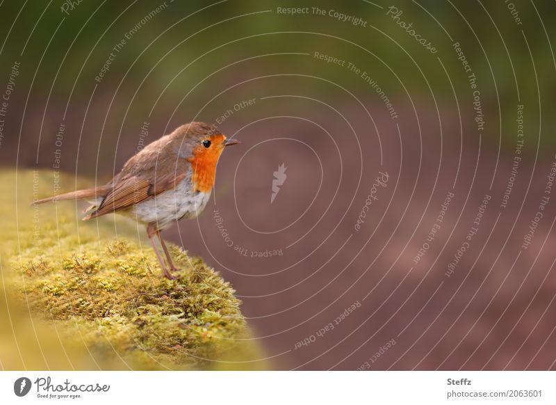 Gartenbesucher Natur Sommer schön Tier gelb Frühling Freiheit braun Vogel orange Textfreiraum Wildtier Idylle warten beobachten