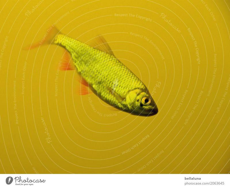 Geschafft! - Sechs von sechs - Umwelt Natur Wasser Teich See Tier Wildtier Fisch Aquarium 1 frei kalt nass natürlich dünn schön braun gelb grau grün rosa rot
