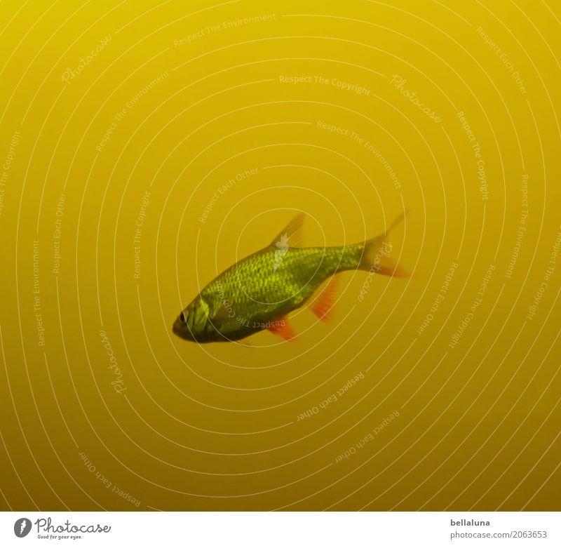 Einer von Sechs Natur Wasser Teich See Tier Wildtier Fisch Tiergesicht Schuppen Aquarium 1 dunkel glänzend nass braun gelb grün rosa rot silber