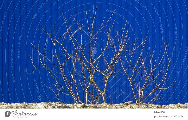Winterimpression blau Winter Schnee grau Sträucher