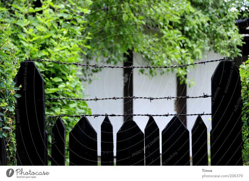 Nachbars geheimnisvoller Garten Mauer Wand stachelig Sicherheit Zaun Holzzaun Stacheldraht Baum Sträucher abgelegen Gartenarbeit dunkel grün schwarz weiß