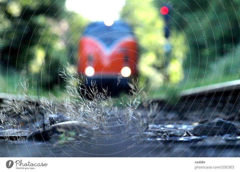 Last Train Natur grün Pflanze rot grau Verkehr Eisenbahn Perspektive ästhetisch retro gefährlich fahren Sträucher nah bedrohlich Gleise