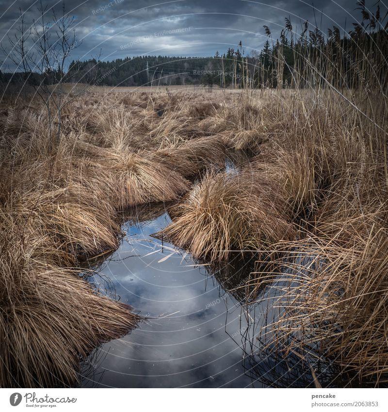 ruhezeit Natur Pflanze Landschaft Winter Gras warten schlafen Sumpf Riedgras Moor Winterschlaf