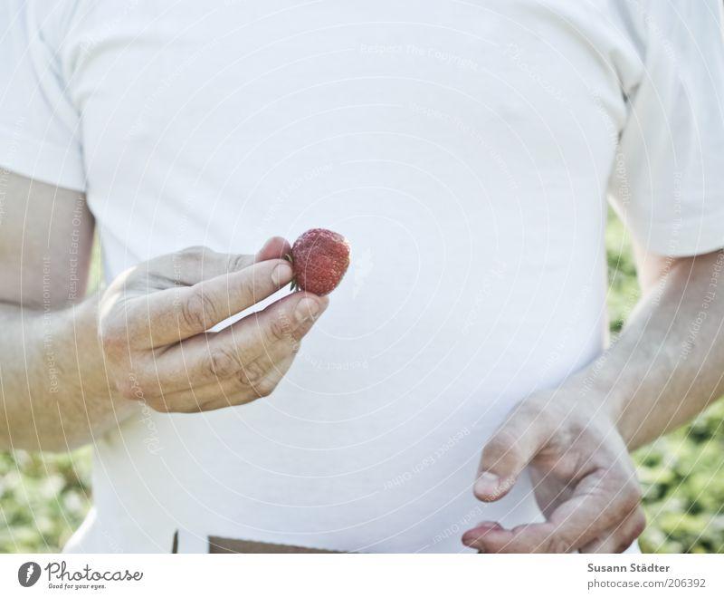 Eine in den Mund und keine ins Körbchen Mann Hand Sommer Essen Frucht süß Gesunde Ernährung T-Shirt genießen Brust lecker Ernte Bioprodukte
