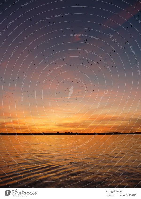 Die Vögel Natur Wasser Himmel Horizont Ostsee Meer ruhig Vogel Rügen Abenddämmerung Freiheit Wellen Farbfoto Außenaufnahme Menschenleer Textfreiraum oben