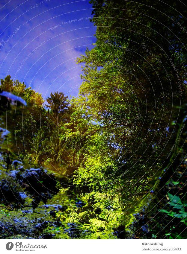 neulich in der Pfütze... Umwelt Natur Landschaft Pflanze Wasser Himmel Wolkenloser Himmel Sommer Wärme Baum Sträucher Grünpflanze Wildpflanze Wald Teich kalt