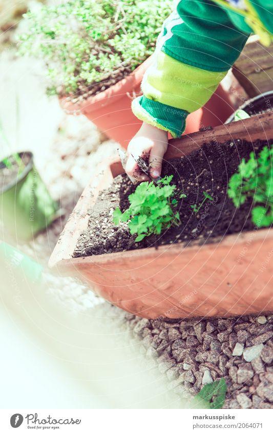 Kräuter Ernte im Garten Mensch Sommer Gesunde Ernährung Hand Essen Junge Spielen Lebensmittel Freizeit & Hobby Wachstum Kindheit Arme Lebensfreude Finger
