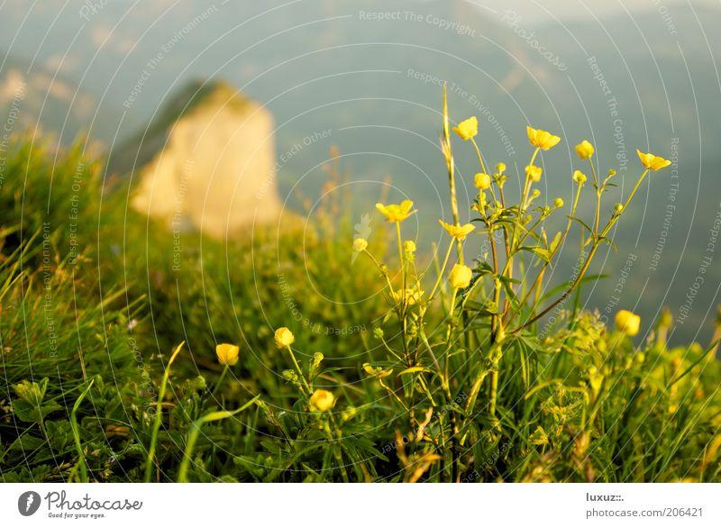 Natur pur Blume Pflanze Berge u. Gebirge Landschaft Wetter Grünpflanze Wiesenblume