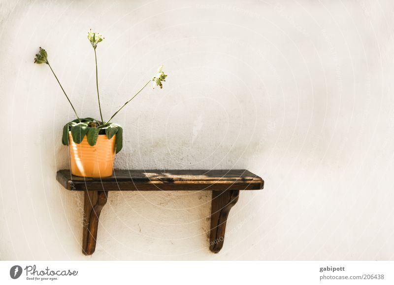 Wassern(m)angel Sommer Wärme Pflanze Blume Blüte Grünpflanze Blumentopf trocken gelb vertrocknet Blumenstengel Dekoration & Verzierung Regal Gedeckte Farben