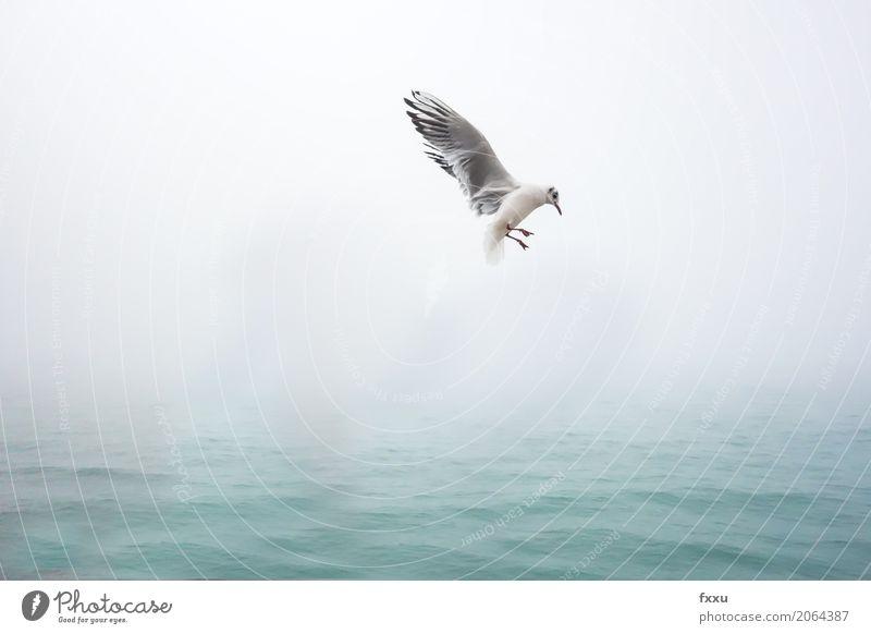 Möwe in Venedig Natur blau Wasser Tier Glück Freiheit Vogel fliegen frei Fröhlichkeit Leichtigkeit Vorfreude Begeisterung Frühlingsgefühle