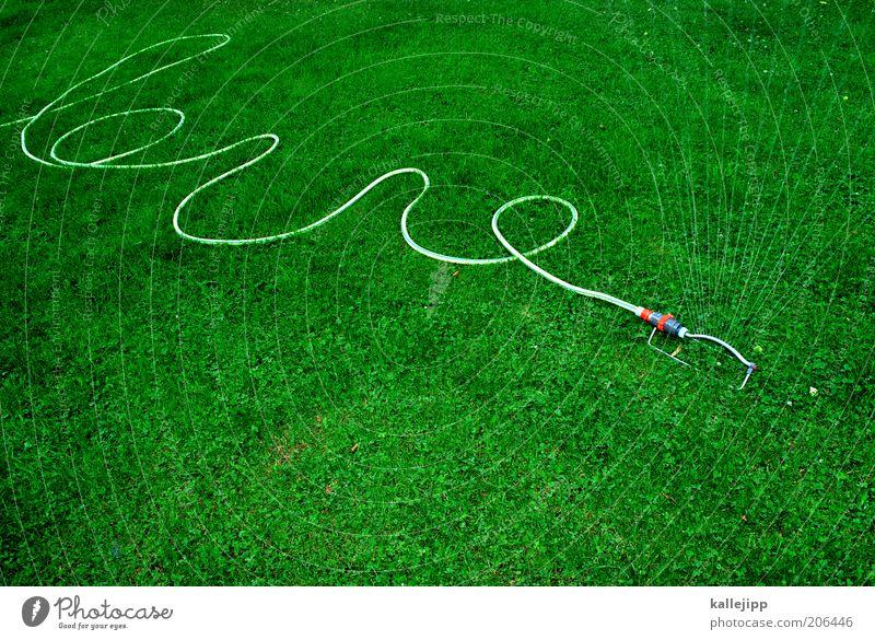 der gärtner kommt Freizeit & Hobby Garten Gartenarbeit Umwelt Wasser Wassertropfen Sommer Pflanze Gras Gartenschlauch Rasensprenger feucht Farbfoto mehrfarbig