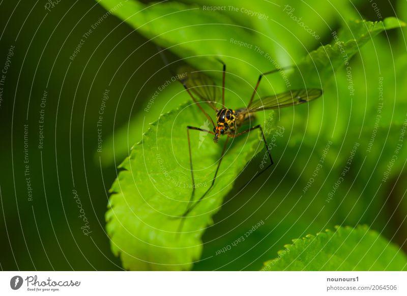 verschlafen Tier Frühling Wildtier Schnake 1 liegen Blick sitzen ästhetisch Coolness elegant gruselig braun gelb grün orange Farbfoto mehrfarbig Außenaufnahme